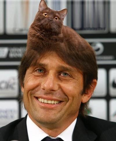 Il famoso gatto di Conte
